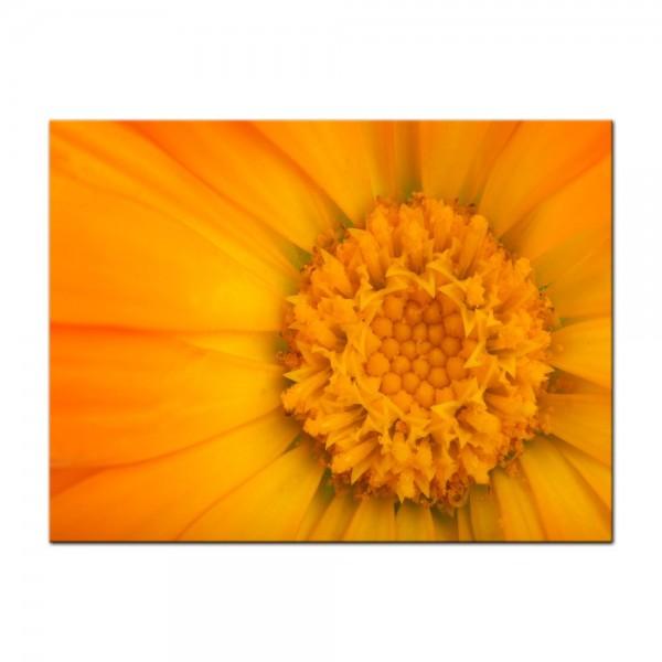 Leinwandbild - Gelbe Blume