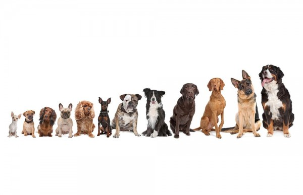 Fototapete - Hundebande