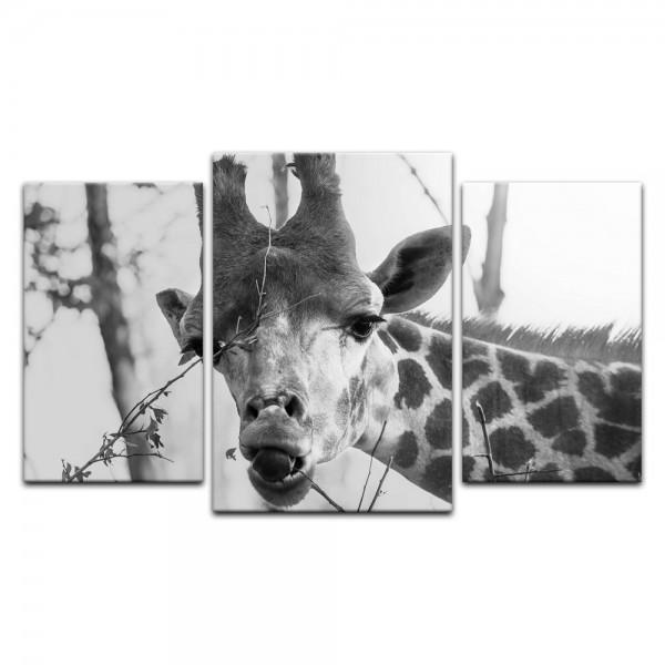 Leinwandbild - Giraffe - schwarz weiß