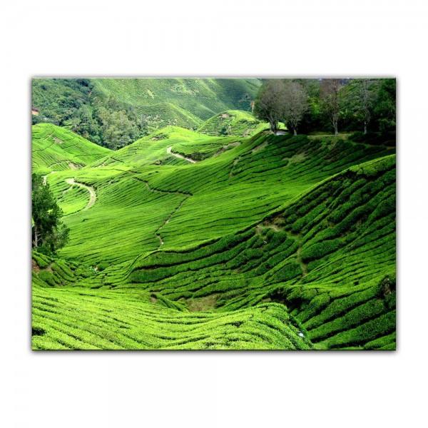 Leinwandbild - Teeplantage in Malaysia