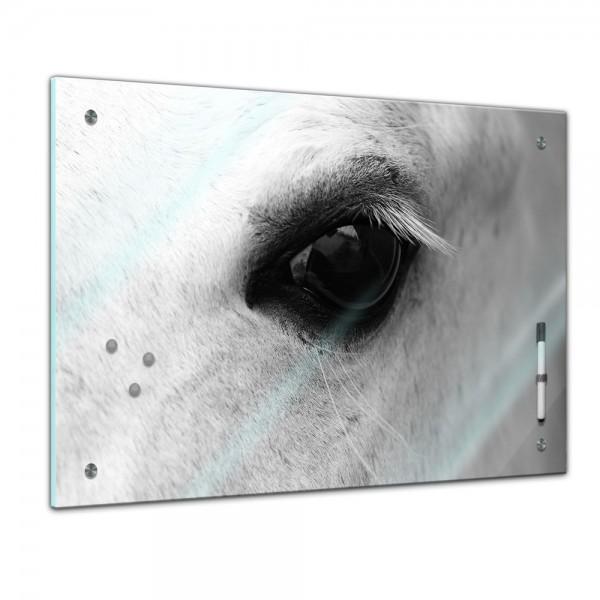 Memoboard - Tiere - Pferdeblick