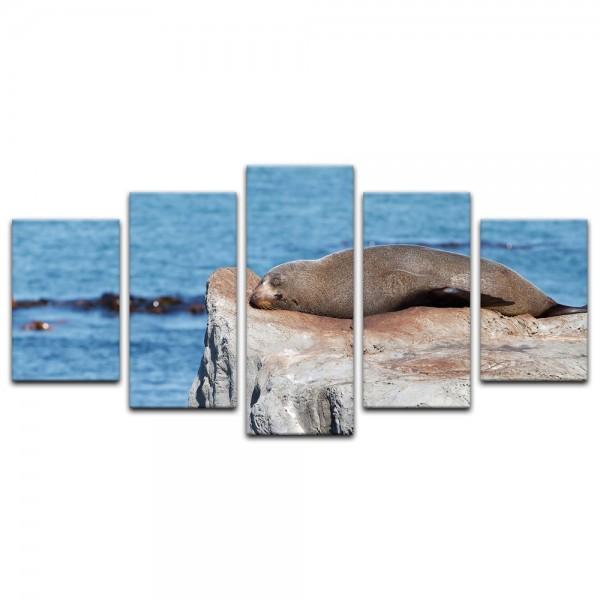 Leinwandbild - Robbe auf einem Felsen