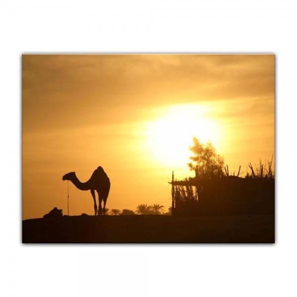 Leinwandbild - Kamel in Ägypten