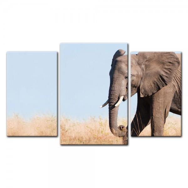 Leinwandbild - Elefant II