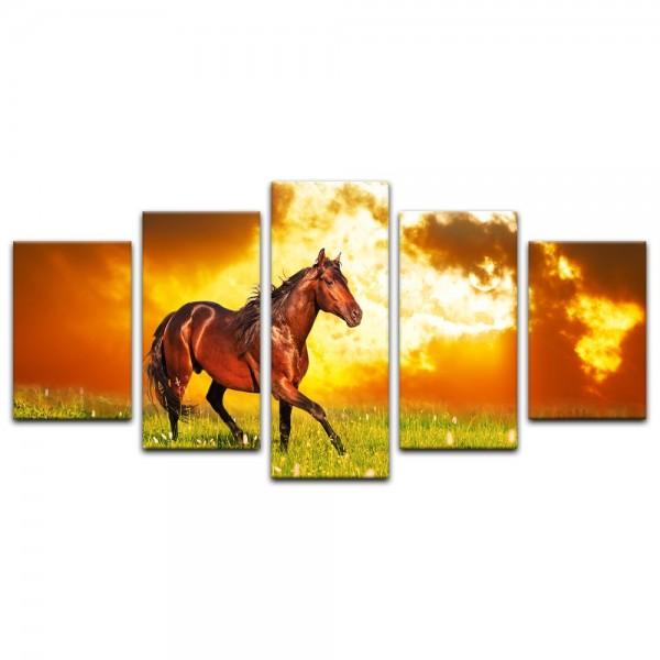 Leinwandbild - Pferd auf einer Wiese