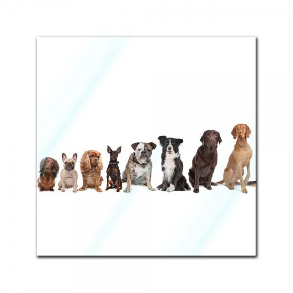 Glasbild - Hundebande