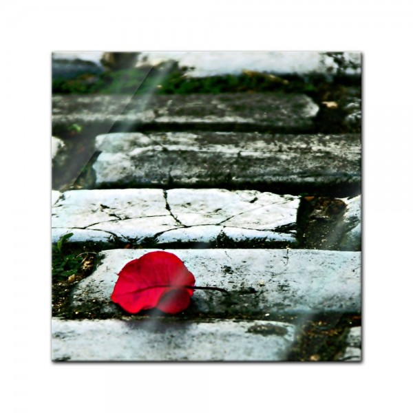 Glasbild - Rosenblatt auf der Strasse
