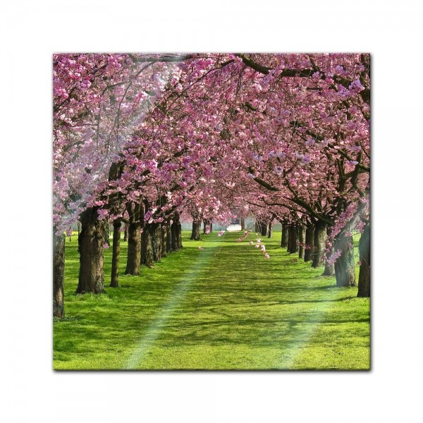 Glasbild - Kirschblüten