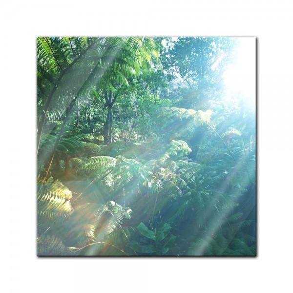 Glasbild - Regenwald in Hawaii