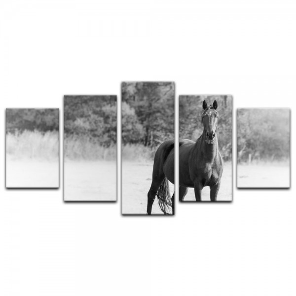 Leinwandbild - Pferd - schwarz weiß