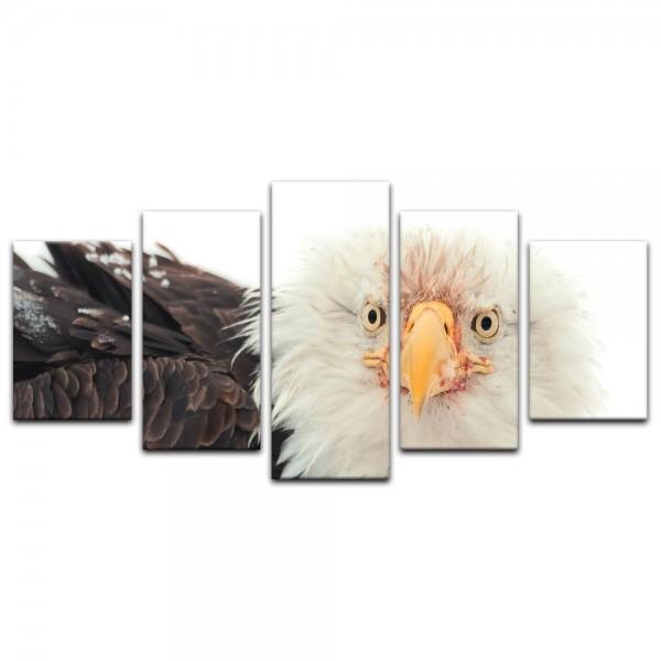 Leinwandbild - Weißkopfseeadler - Portrait
