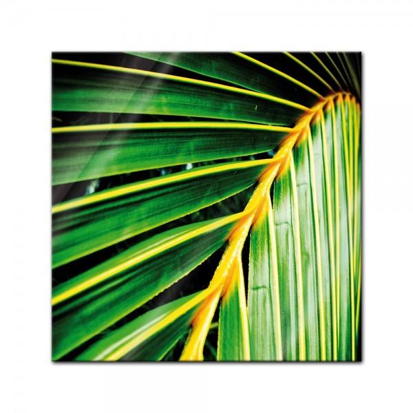 Glasbild - Palmenblatt - Malediven