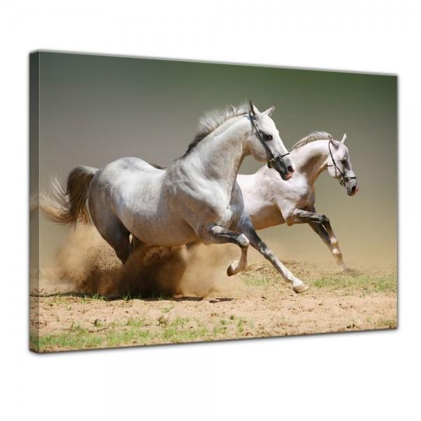 SALE Leinwandbild - Pferde II - 80x60 cm