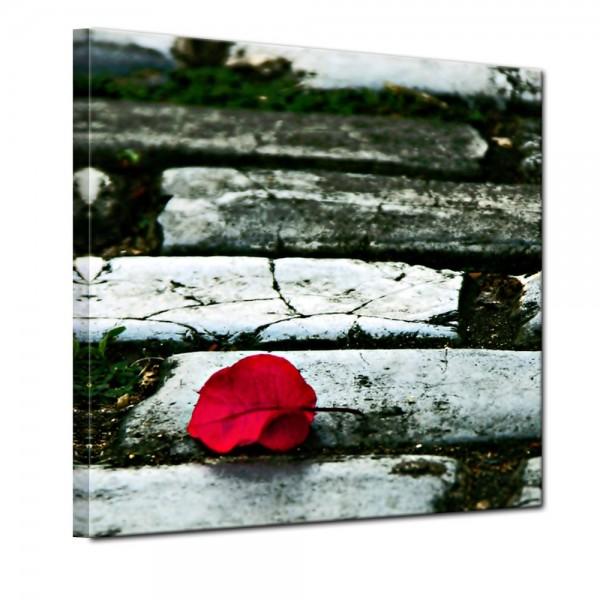 SALE Leinwandbild - Rosenblatt auf der Strasse - 40x40 cm