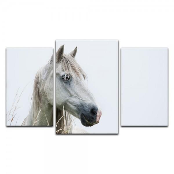 Leinwandbild - Pferd III