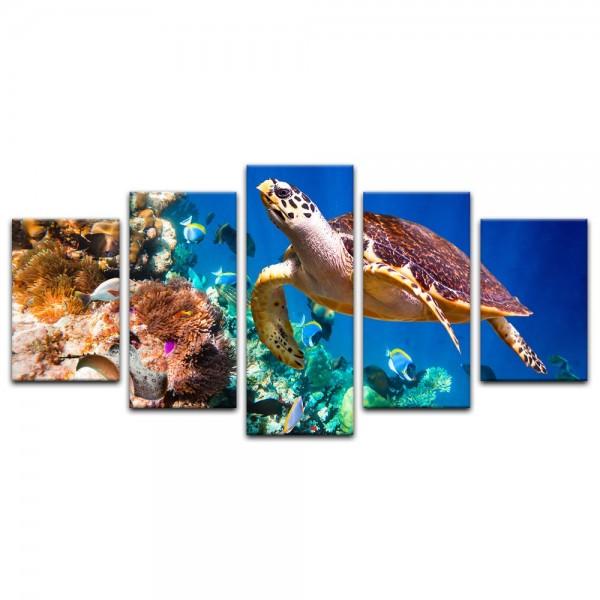 Leinwandbild - Karettschildkröte