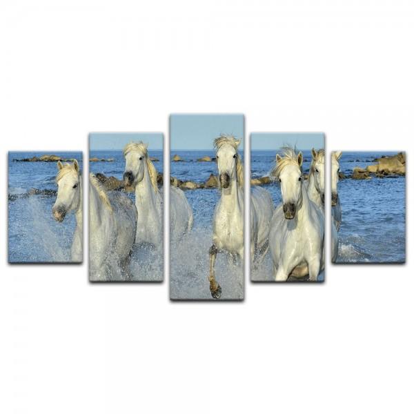 Leinwandbild - weiße Pferde in Camargue - Frankreich