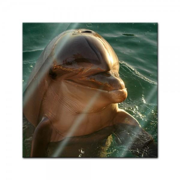 Glasbild - Delphin