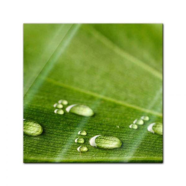 Glasbild - Wasserspuren auf einem Blatt