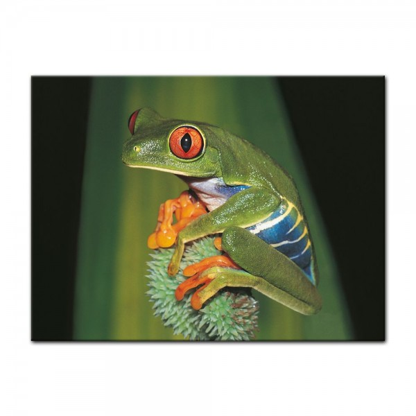Leinwandbild - Frosch in der Natur