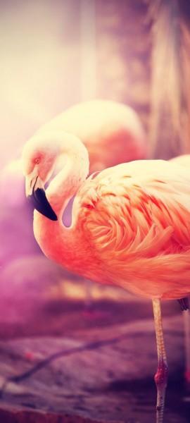 Türtapete selbstklebend Flamingo Retro Vintage 90 x 200 cm Tier rosa Vogel Gefieder tropisch Tierbi