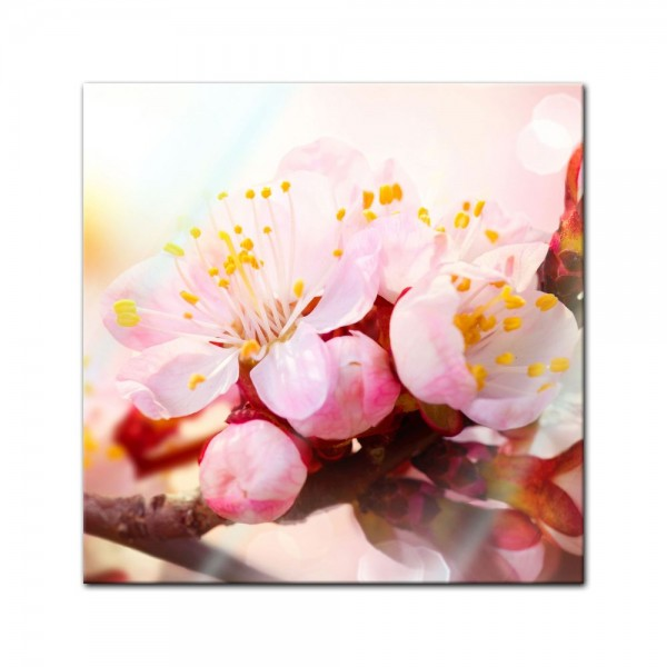 Glasbild - Aprikosenblüten