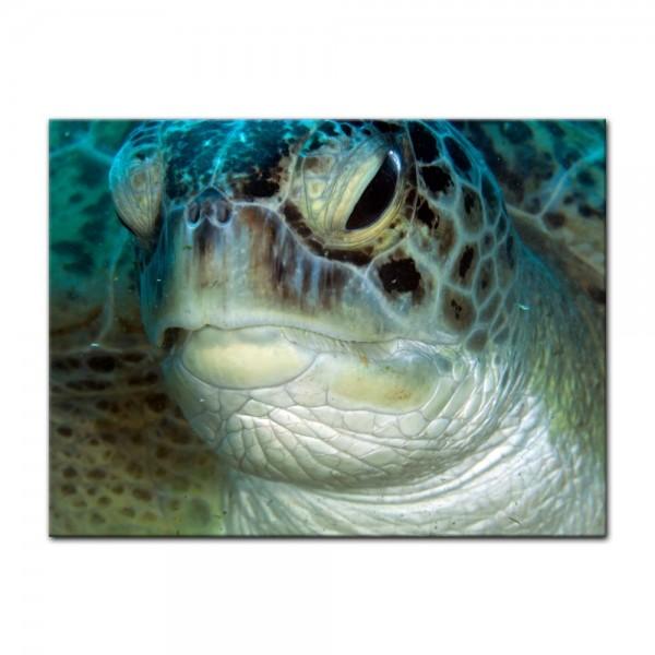 Leinwandbild - Schildkröte im Roten Meer