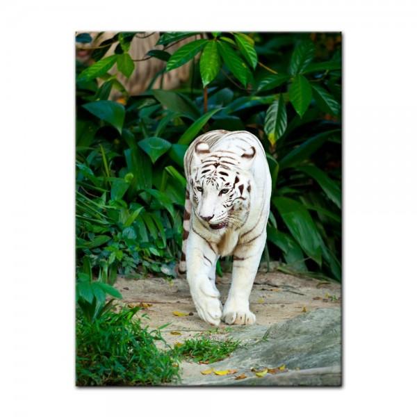 Leinwandbild - Weißer Tiger II
