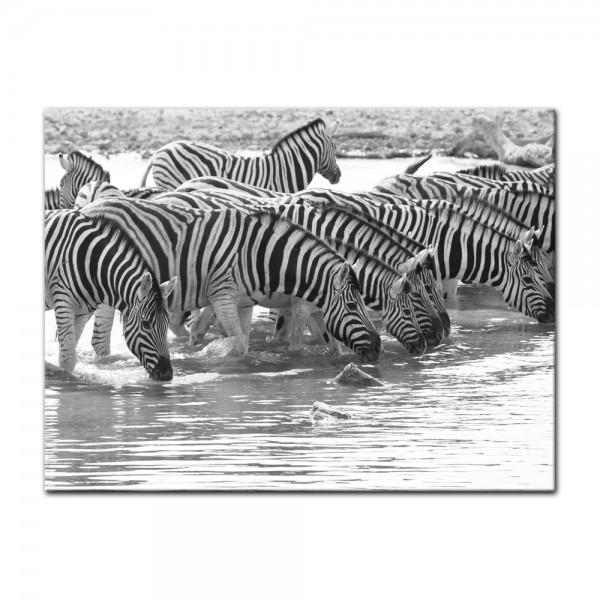 Leinwandbild - Zebras an einer Wasserquelle