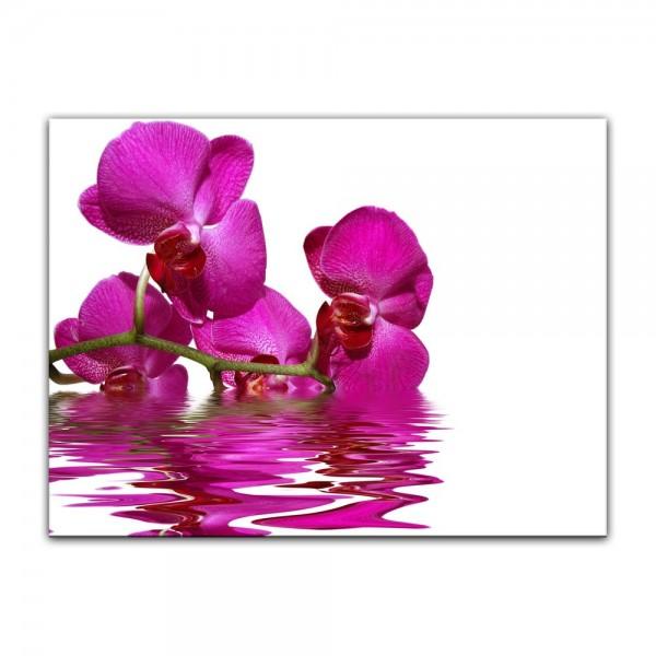 Leinwandbild - Orchidee II