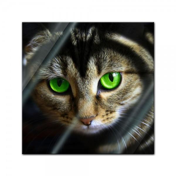 Glasbild - Katze mit grünen Augen