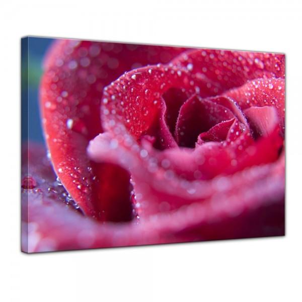SALE Leinwandbild - Rosenblüte - 80x60 cm