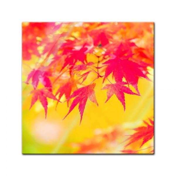 Glasbild - Rote und gelbe Ahornblätter
