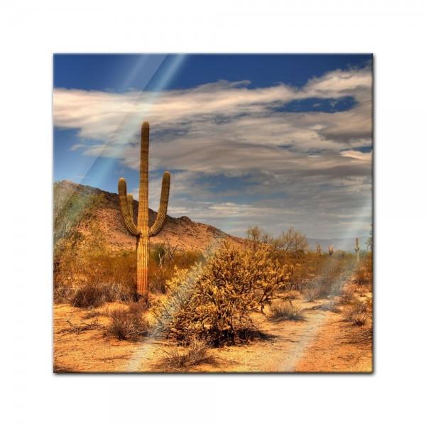 Glasbild - Wüste Kaktus