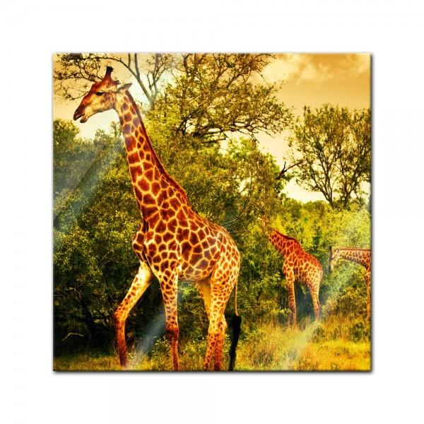 Glasbild - Giraffen - Südafrika