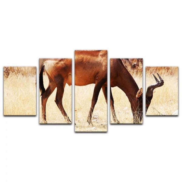 Leinwandbild - Afrikanische Antilope