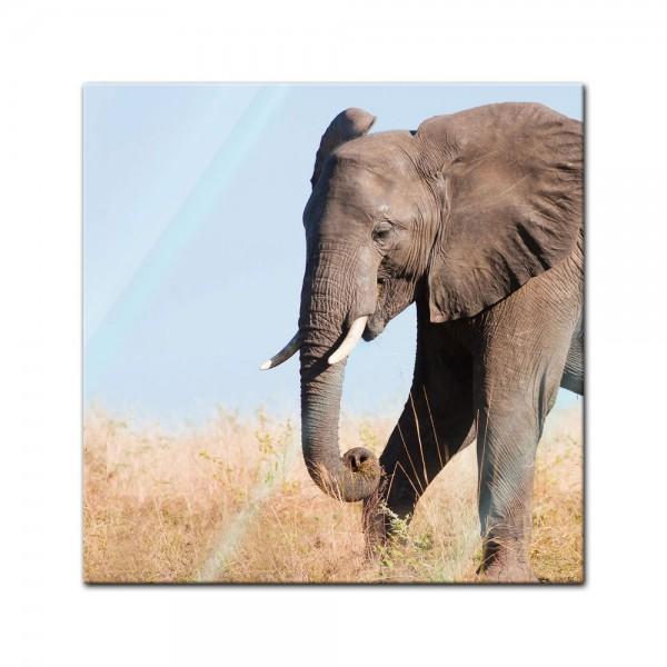 Glasbild - Elefant II
