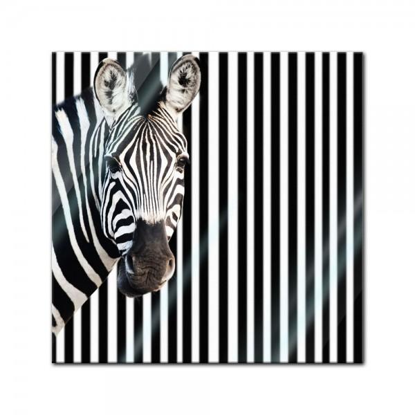 Glasbild - Zebra vor einem gestreiften Hintergrund