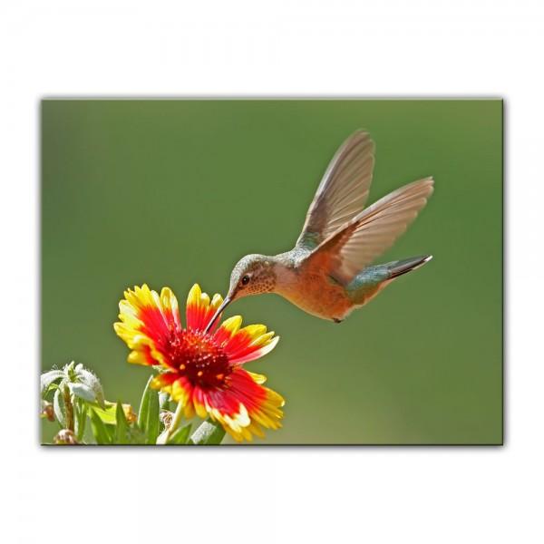 Leinwandbild - Kolibri