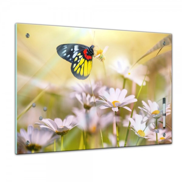 Memoboard - Tiere - Schmetterling auf einer Blume