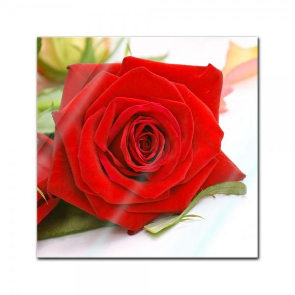 Glasbild - Rose