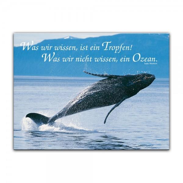 Leinwandbild - Was wir wissen, ist ein Tropfen! Was wir nicht wissen, ein Ozean ( Isaac Newton )