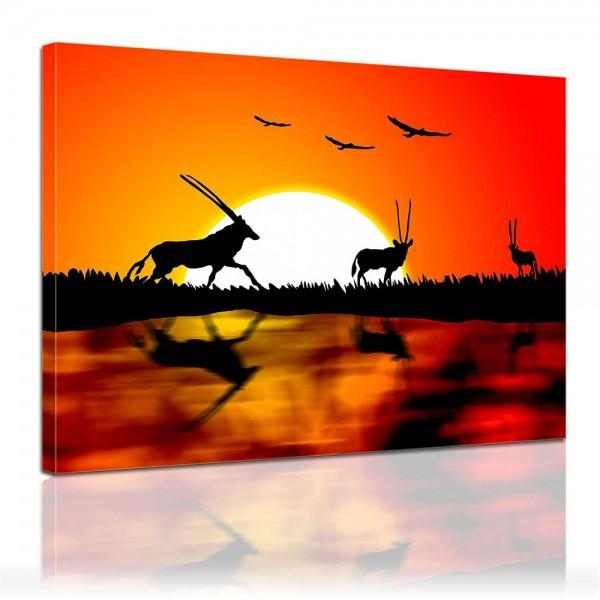 Leinwandbild - Gazellen im Sonnenuntergang