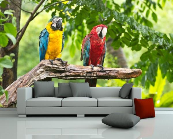 Fototapete - Macaw Papageien