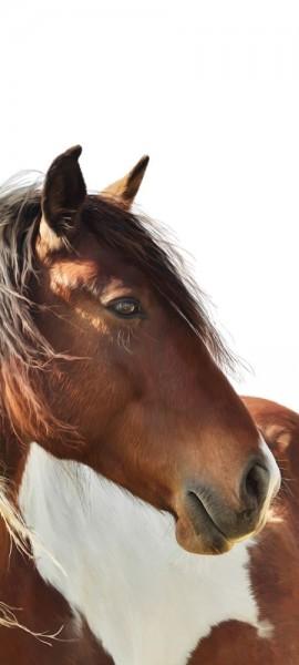 Türtapete selbstklebend Pferd Portrait 90 x 200 cm Tier reiten horse Pferdekopf Pferdebild Tierbild