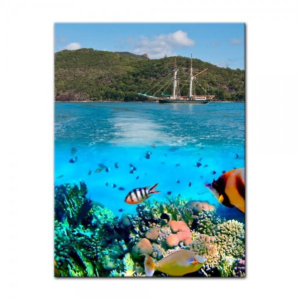 Leinwandbild - Marine Life in the Whitsundays - Australien