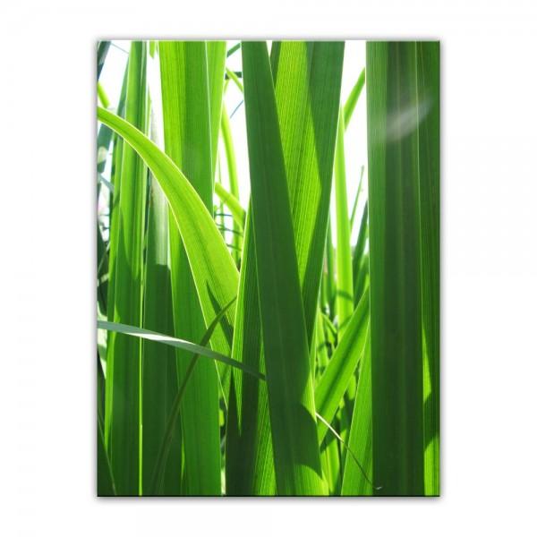 Leinwandbild - Gras