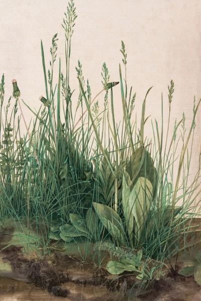 Fototapete Albrecht Dürer - Alte Meister - Das große Rasenstück