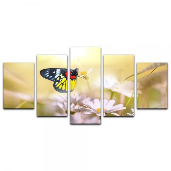 Leinwandbild - Schmetterling auf einer Blume