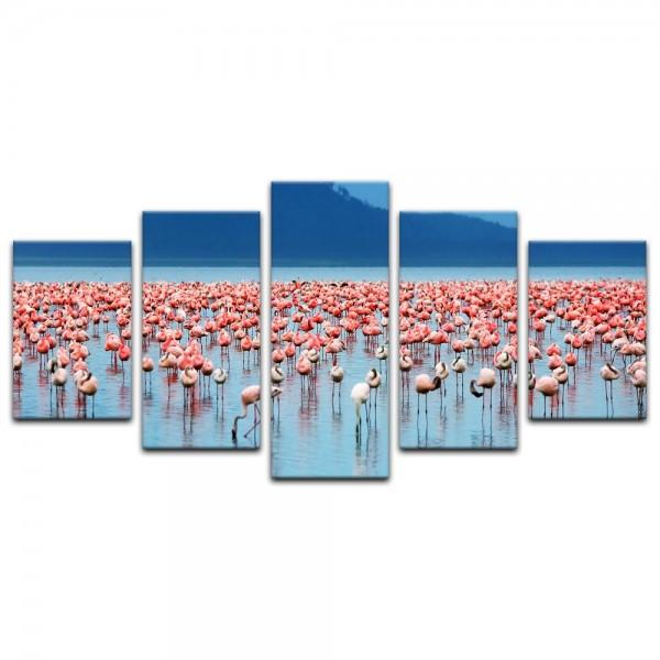 Leinwandbild - Afrikanische Flamingos